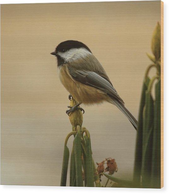 Chickadee On Rhododendron Wood Print