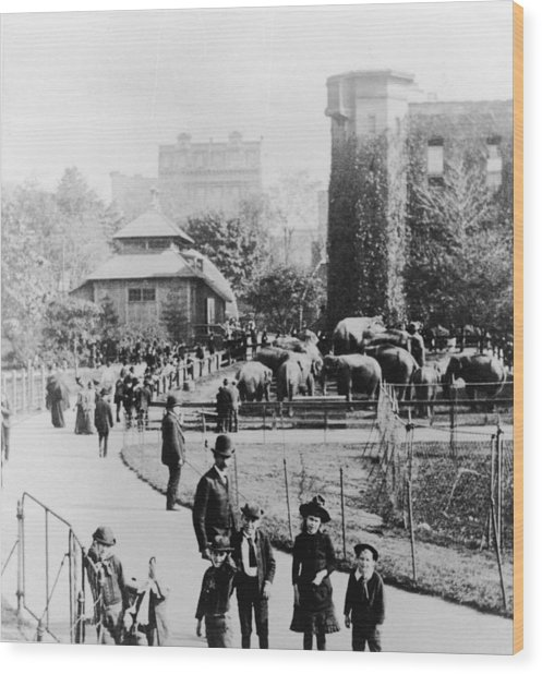 Children In Central Park Zoo Wood Print by Hulton Archive