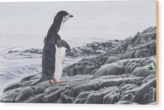 Wood Print featuring the painting Chinstrap Penguin On A Rock By Alan M Hunt by Alan M Hunt