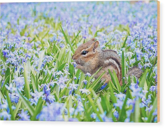 Chipmunk On Flowers Wood Print