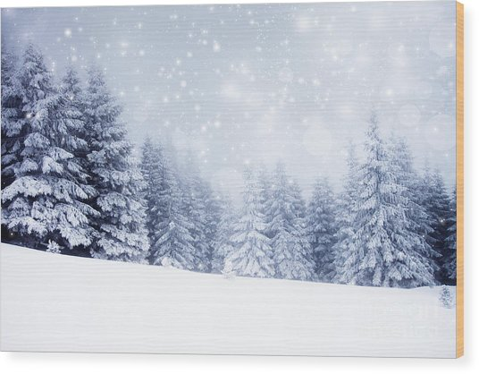 Christmas Background With Snowy Fir Wood Print