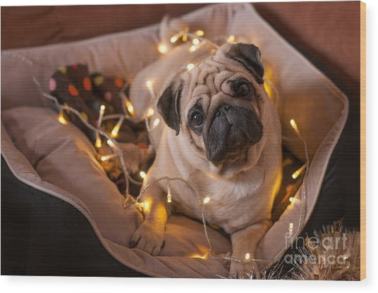 Christmas Dog With Garland In Bed On Wood Print