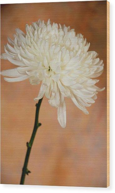 Chrysanthemum On Canvas Wood Print