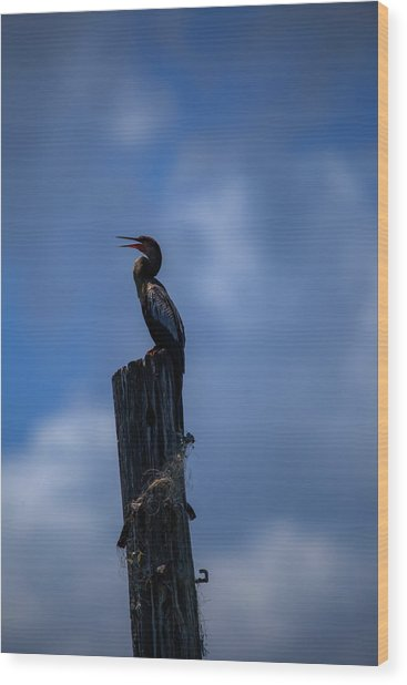 Cinematic Looking Anhinga Wood Print