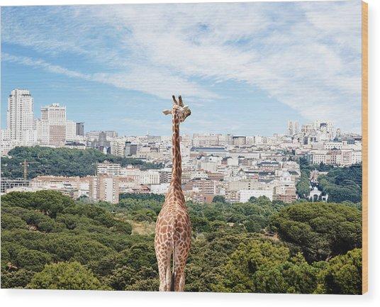 City Giraffe Wood Print by Richard Newstead
