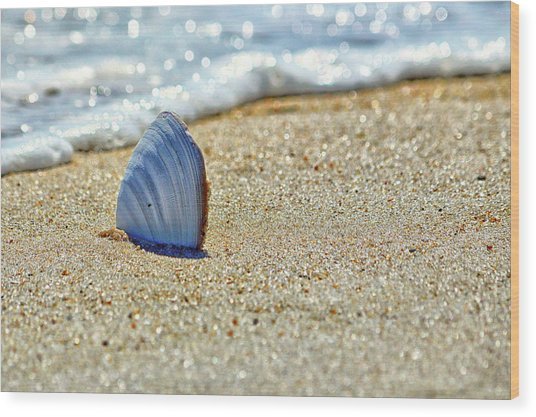 Wood Print featuring the photograph Clamshell On The Beach At Assateague Island by Bill Swartwout Fine Art Photography