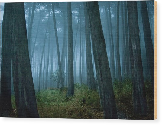 Clearing In Cypress Tree Forest Wood Print by Siri Stafford
