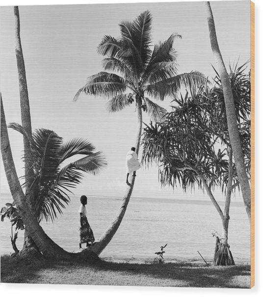 Climbing For Coconuts Wood Print