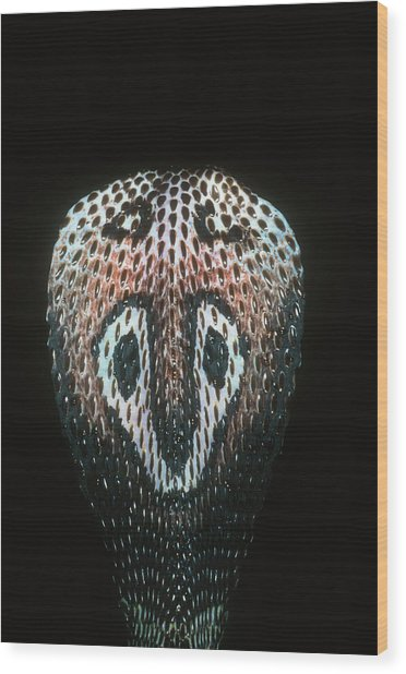 Close-up Of A Spectacled Cobra Wood Print