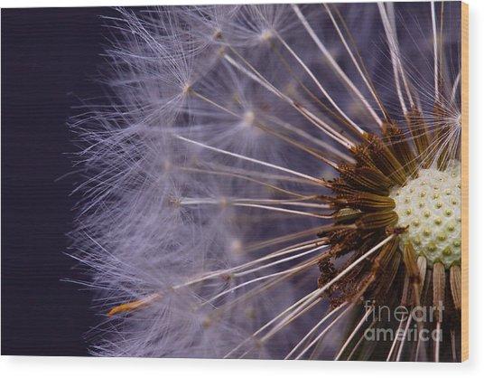 Close-up Of Dandelion Seed Wood Print