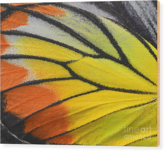 Close Up Of Painted Jezebel Butterflys Wood Print by Super Prin