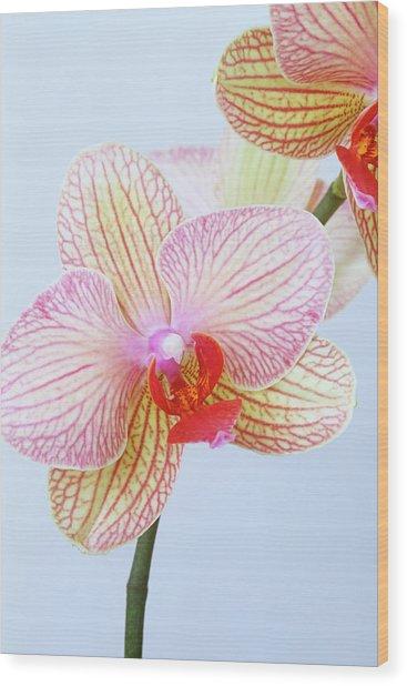 Close Up Of Phalaenopsis Orchid Flower Wood Print by Linda Burgess
