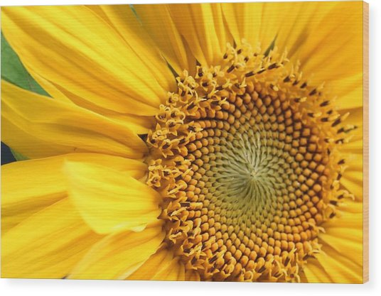 Close-up Of Sunflower Wood Print by Andreas Naumann / Eyeem