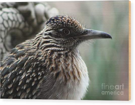 Closeup Of Road Runner By Dragon In Palm Desert Wood Print