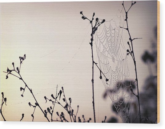 Cob Webbed Wood Print