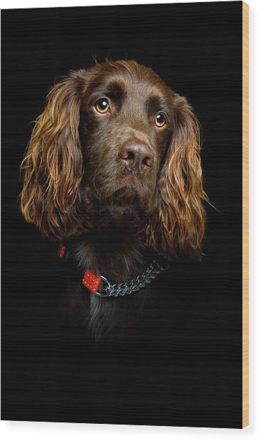 Cocker Spaniel Puppy Wood Print
