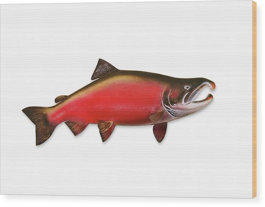 Coho Salmon With Clipping Path Wood Print by Georgepeters