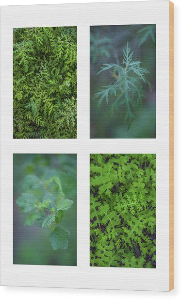 Collage - Sensitive To Green Wood Print by Alexander Kunz