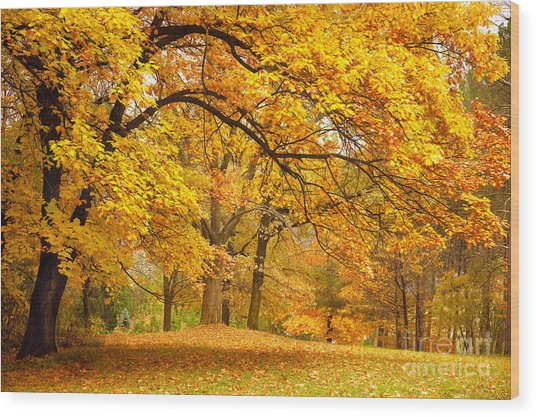 Collection Of Beautiful Colorful Autumn Wood Print