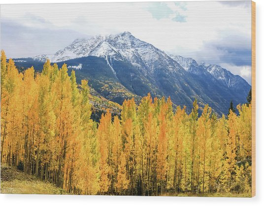 Colorado Aspens And Mountains 2 Wood Print