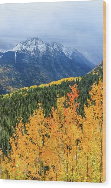 Colorado Aspens And Mountains 4 Wood Print
