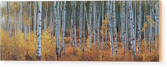 Colorado Autumn Wonder Panorama Wood Print
