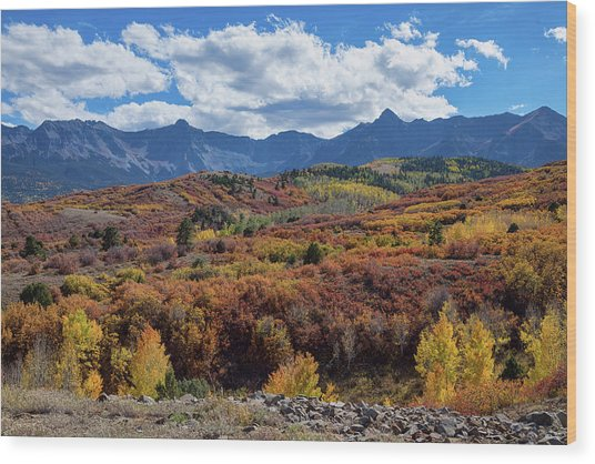 Wood Print featuring the photograph Colorado Color Lalapalooza by James BO Insogna