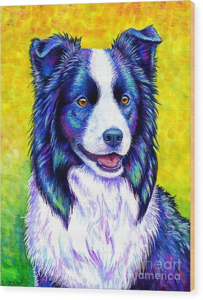 Colorful Border Collie Dog Wood Print