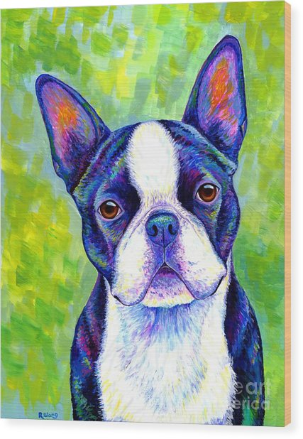 Colorful Boston Terrier Dog Wood Print