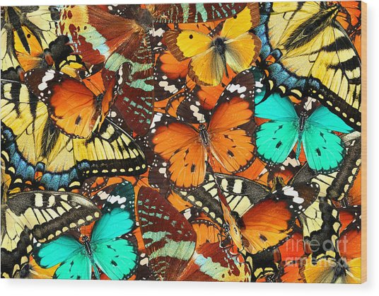 Colorful Butterflies Background. Nature Wood Print