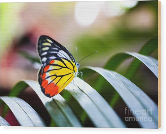 Colorful Butterfly Resting On The Palm Wood Print