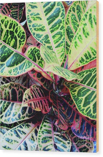 Colorful - Croton - Plant Wood Print