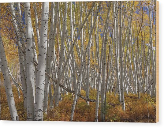 Wood Print featuring the photograph Colorful Stick Forest by James BO Insogna