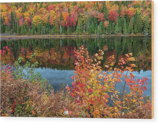 Wood Print featuring the photograph Colors Of Aurtumn by Pierre Leclerc Photography