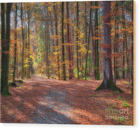 Colours Of Nature Wood Print