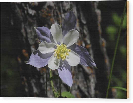 Columbine Wood Print