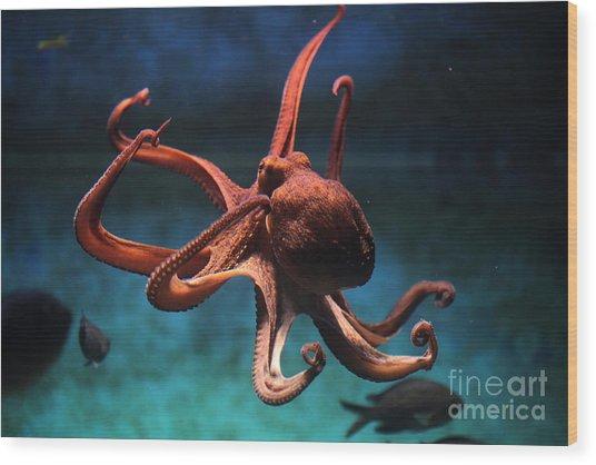 Common Octopus Octopus Vulgaris Wood Print