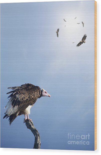 Conceptual - Vultures Waiting To Prey Wood Print