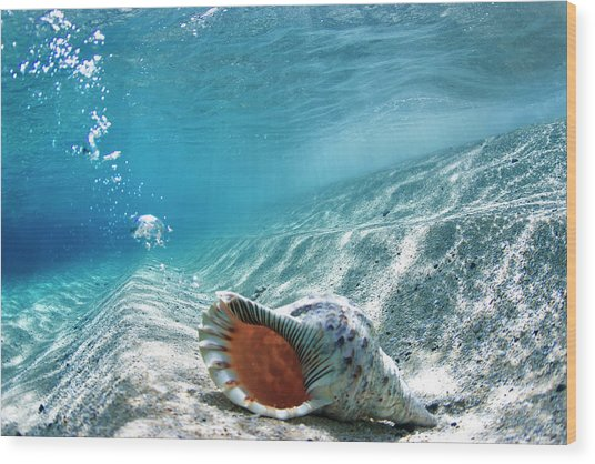 Conch Shell Bubbles Wood Print