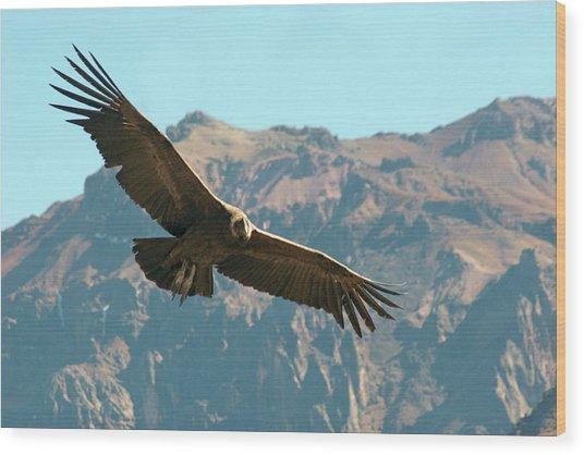 Condor In Flight Wood Print