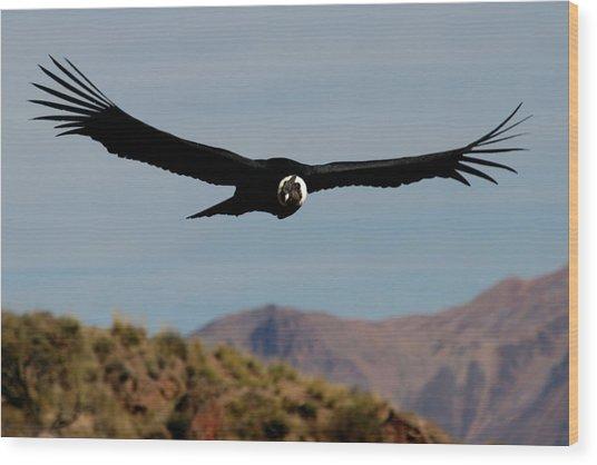 Condor Wood Print