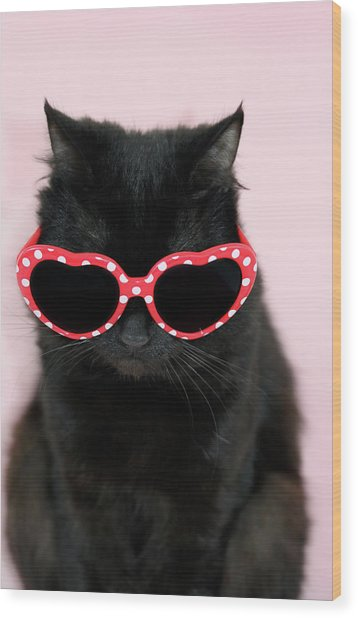 Cool Cat Wearing Sunglasses Wood Print by Kelly Bowden