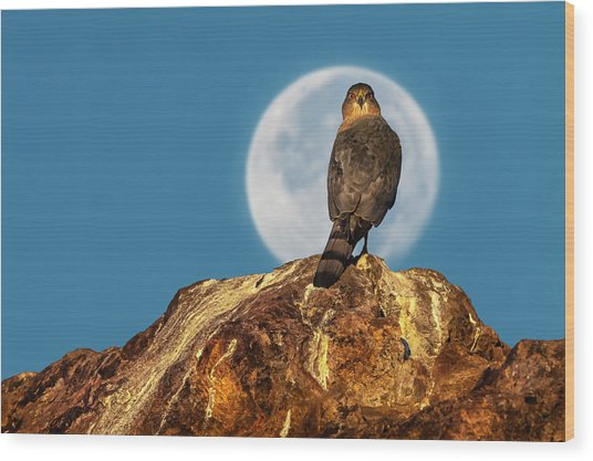 Coopers Hawk With Moon Wood Print