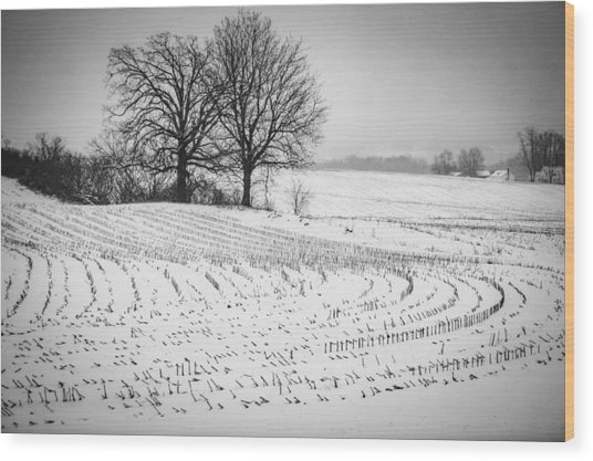 Corn Snow Wood Print