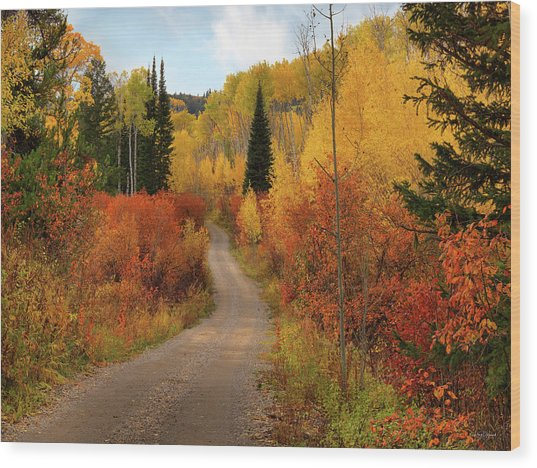 Country Road In Autumn Wood Print by Leland D Howard
