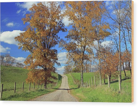 Wood Print featuring the photograph Country Road Through Fall Trees by Angela Murdock