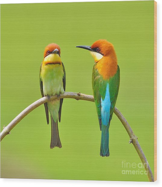 Couple Of Bee Eater Bird Wood Print