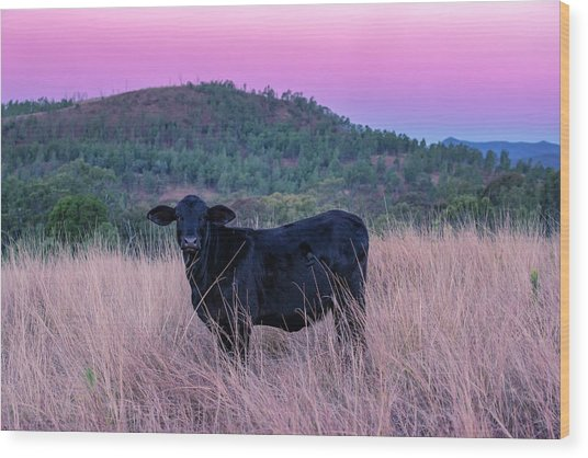 Cow Outside In The Paddock Wood Print