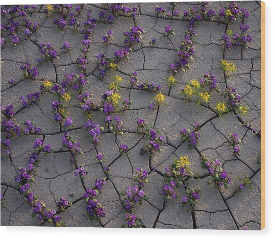 Cracked Blossoms II Wood Print