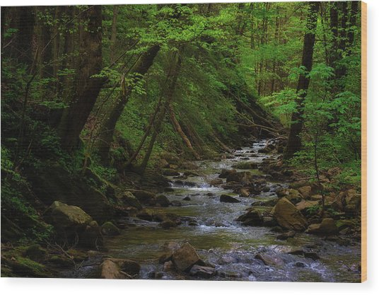 Wood Print featuring the photograph Creek Flowing Through Shady Forest by Dee Browning
